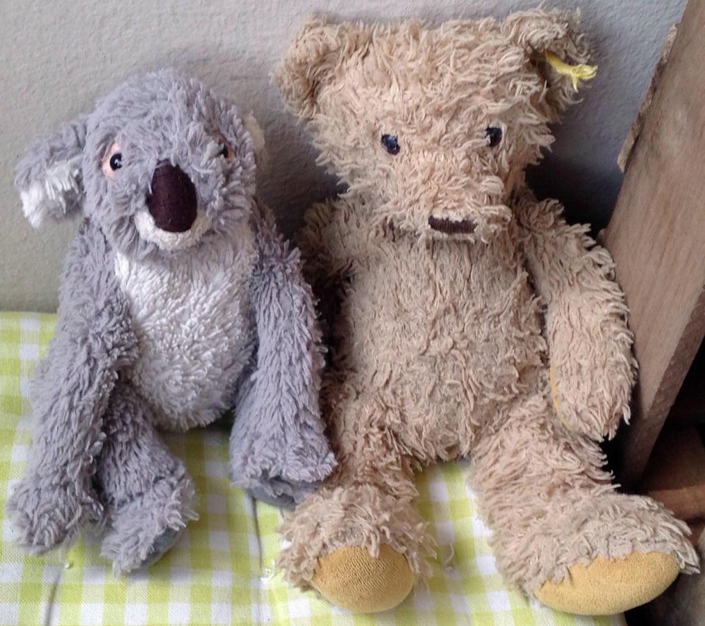 Koala und Teddy